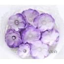 Kwiatki AC1